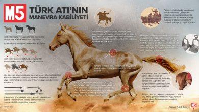 Photo of Türk Atı'nın Manevra Kabiliyeti